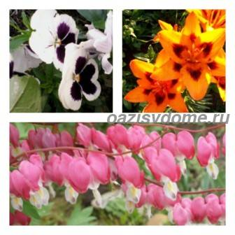 Какие цветы можно сажать в июле, августе, сентябре: название, фото и описание цветущих многолетников