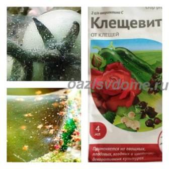Паутинный клещ на томатах, огурцах, клубнике, перцах: меры борьбы и профилактика