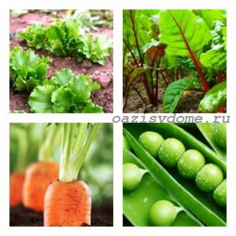 Овощи и зелень для посадки в августе