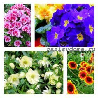 Какие цветы можно сажать под зиму: посадка цветов осенью многолетних, однолетних, луковичных