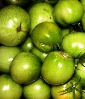 Зеленые помидоры для дозревания в домашних условиях