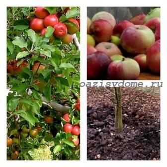 Подкормки и удобрение яблонь осенью: как и чем подкормить деревья