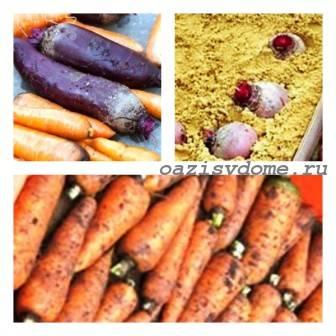 Способы хранения моркови и свеклы в погребе и домашних условиях зимой
