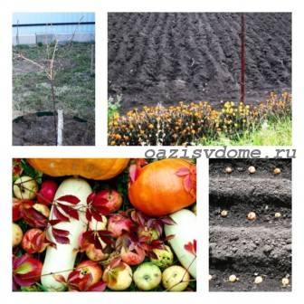 Лунный календарь садовода, цветоводы, огородника на октябрь