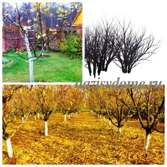 Чем опрыскать плодовые деревья и кустарники осенью: искореняющая обработка сада