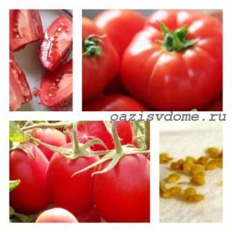 Как правильно собрать и сохранить семена томатов в домашних условиях