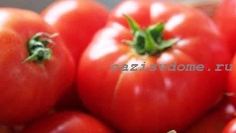 Плоды томатов