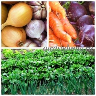 Что можно посадить осенью на даче: сорта, сроки и особенности посева под зиму