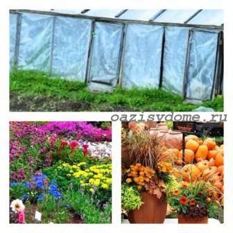 Сезонные работы в саду и огороде в октябре – завершение дачного сезона