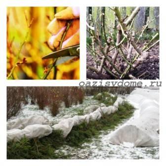 Розы: укрытие на зиму, обрезка осенью и подготовка к зиме, фото