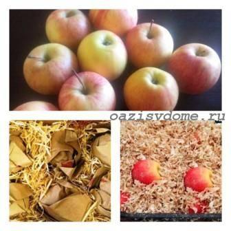 Как сохранить яблоки до весны или даже до следующего урожая свежими – лучшие способы хранения
