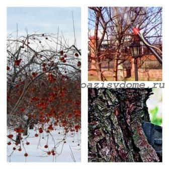Подготовка молодых и взрослых яблонь к зиме: обрезка, подкормка, укрытие