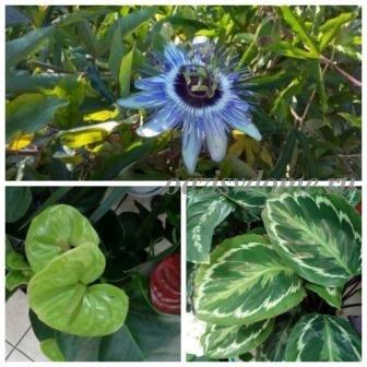 Перекись водорода для домашних цветов: как поливать раствором комнатные растения
