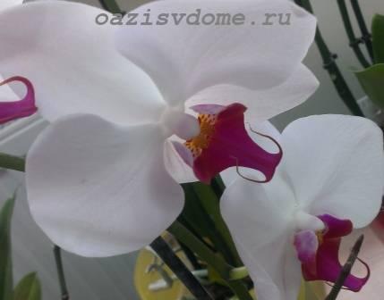Орхидея по фен-шуй, можно ли держать дома, приметы и суеверия