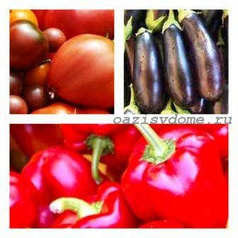 Когда сажать рассаду томатов, перцев, баклажан в Подмосковье