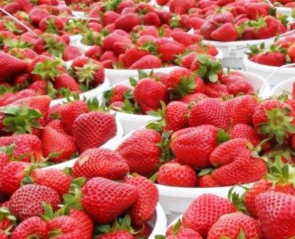 Лучшие урожайные сорта клубники для Подмосковья: описание, фото