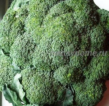 Капуста брокколи: посев и выращивание рассады, когда сажать и как ухаживать