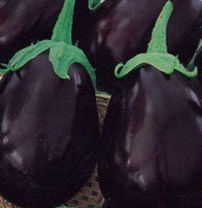 Баклажаны сорта Щелкунчик