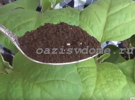Чем подкормить рассаду баклажан, чтобы были толстенькие: народные средства и лучшие удобрения