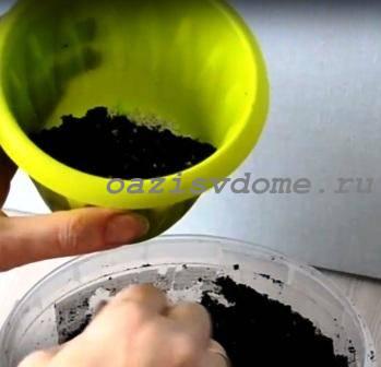 Горшок для пересадки цветка заполняется почвой