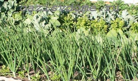 Благоприятные дни в мае по Лунному календарю для посевов, посадок цветов, овощей, зелени