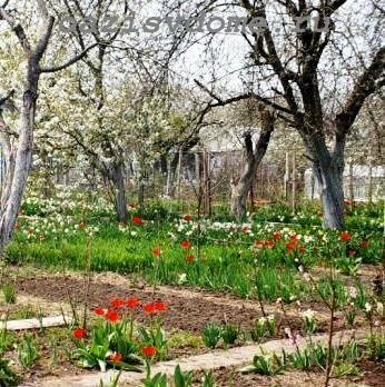 Благоприятные дни в апреле 2019 по Лунному календарю для посевов, пикировки цветов, обработки сада, посадки деревьев