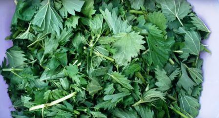 Крапива для приготовления травяного настоя