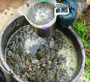 Как приготовить и применять Зеленое удобрение из травы и крапивы