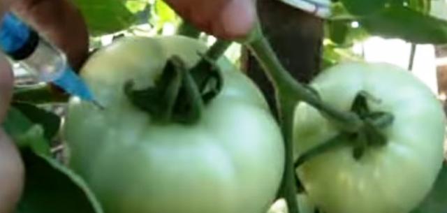 Водка для ускорения созревания помидоров