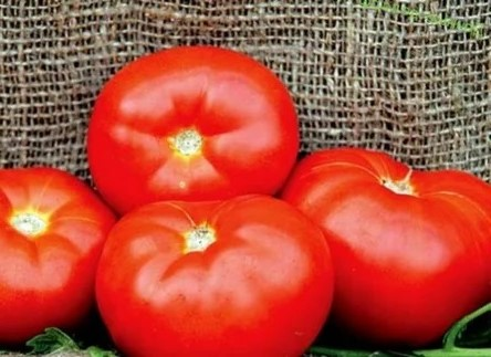 Плоды томатов сорта Красным Красно