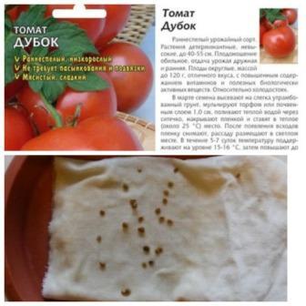 Предпосевная обработка томатов