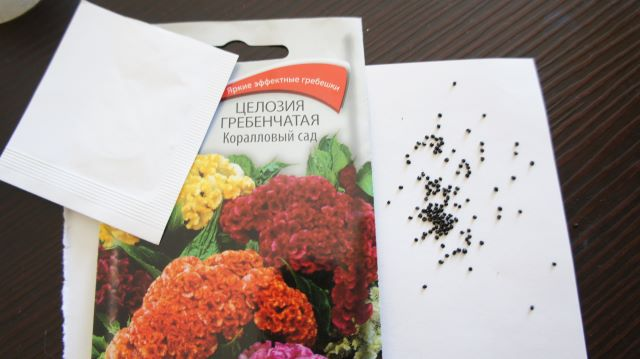 Семена целозии гребенчатой