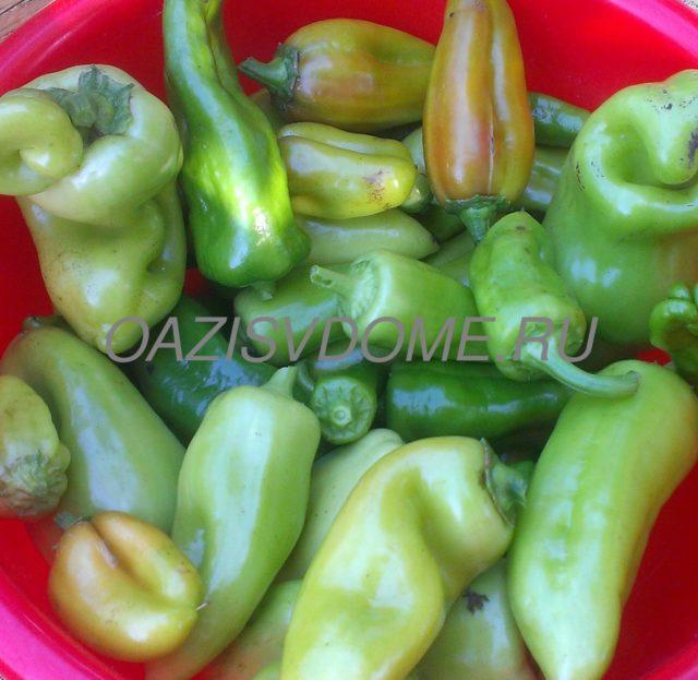 Посадка перцев на рассаду в феврале: когда сажать по Лунному календарю, как подготовить семена
