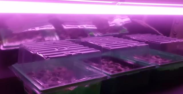 Как правильно подсвечивать рассаду