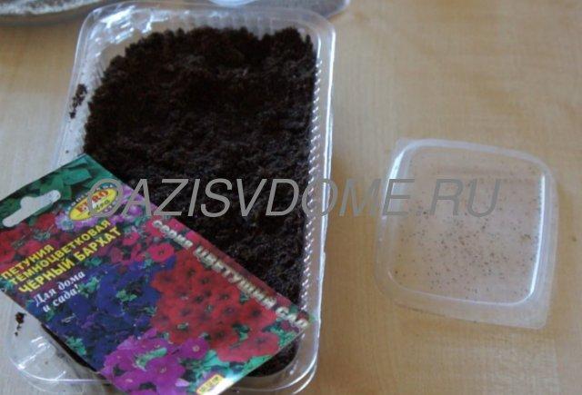 Подготовка к посеву петунии