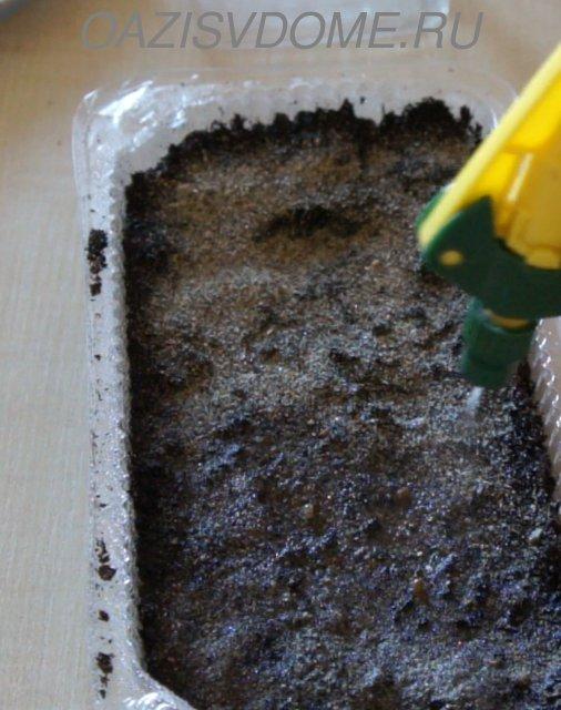 Увлажнение посевов петунии