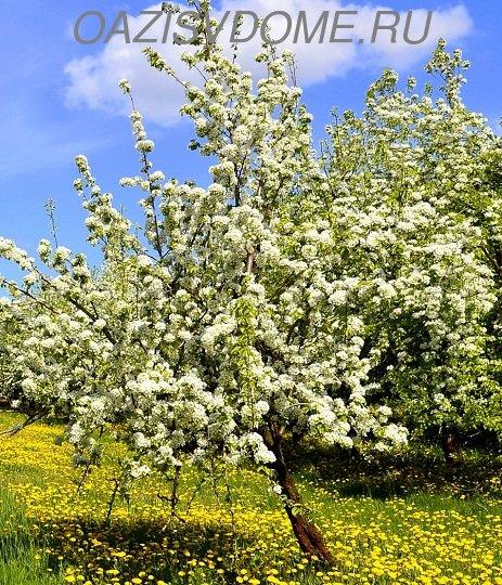 Для садоводов и цветоводов Лунный посевной посадочный календарь