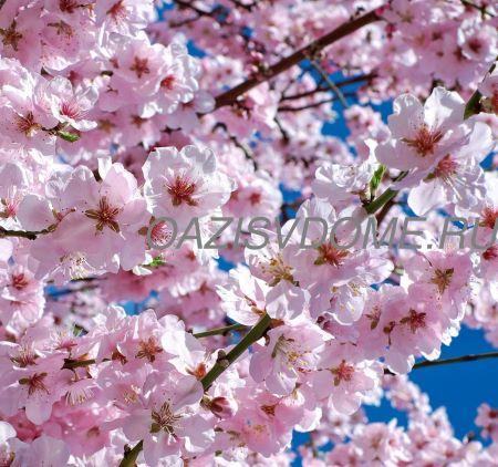 Подкормка вишни весной и летом для улучшения урожая