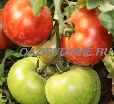 Посадка томатов на рассаду в январе