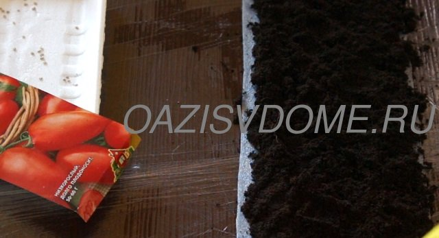 Наполнение землей Самокрутки для посадки томатов на рассаду