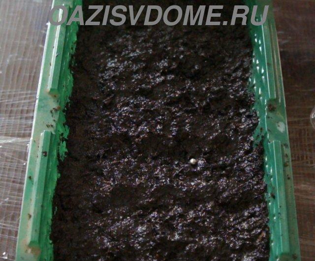 Посевы ранней капусты