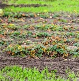 Лунный посевной календарь для Беларуси на октябрь, ноябрь