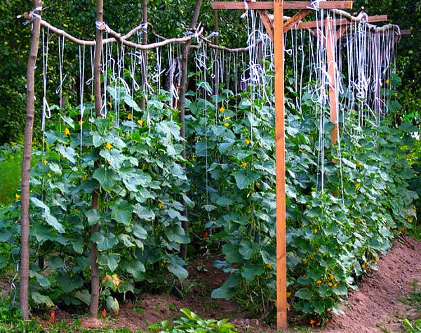 П-образная подвязка огуречных плетей