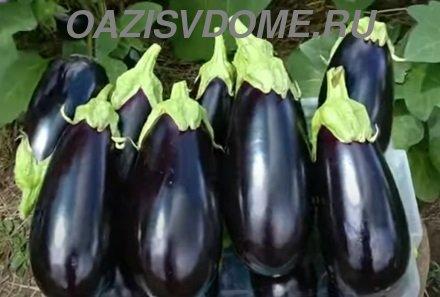 Лучшие подкормки для баклажанов в июле и августе для большого урожая