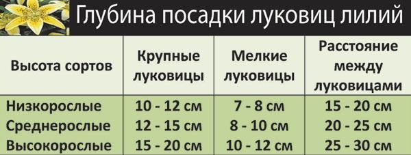 Фото таблицы со схемой посадки лилий