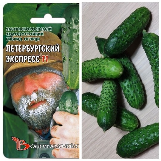 Огурец F1 Петербургский экспресс