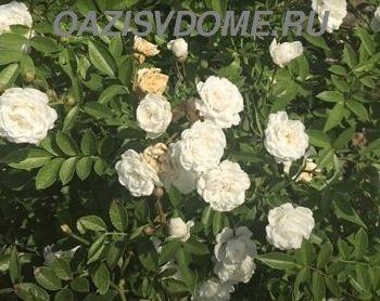 Чем подкормить розы перед укрытием на зиму: лучшие осенние удобрения