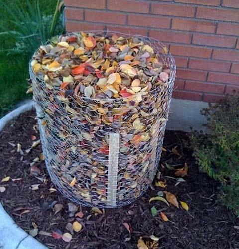 Укрытие кустика на зиму из сухой листвы