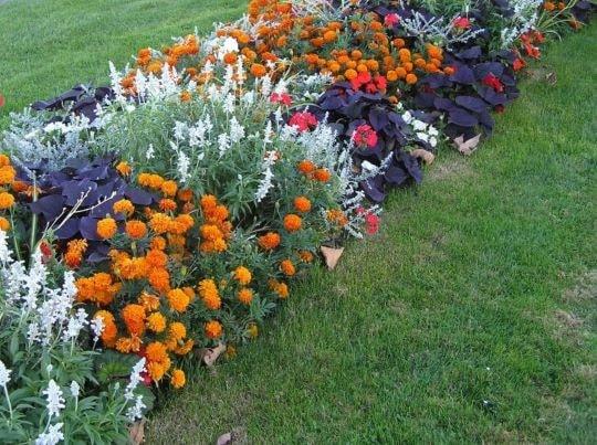 Клумба с бархатцами и другими цветами
