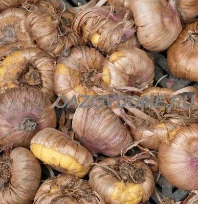 Как сохранить гладиолусы до весны в квартире: 5 способов хранения луковиц